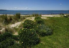 Spindrift Beach Retreat - Mornington Peninsula, VIC