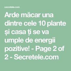 Arde măcar una dintre cele 10 plante și casa ți se va umple de energii pozitive! - Page 2 of 2 - Secretele.com Alter, Feng Shui, Good To Know, Health And Beauty, Pray, Health Fitness, Learning, Pandora, Medicine