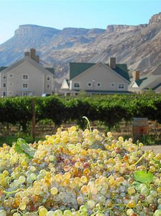 Spend the night on a vineyard in Palisade, CO at the Wine Country Inn. Named 1 of top 7 U.S. vineyard properties by Wine Enthusiast Magazine. #TMOM