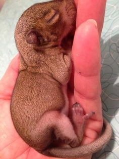 Man finds baby squirrel in a bag of mulch and raises him. :)
