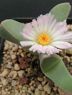 Растение the plant 2004 порно