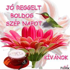 Good Morning, Nap, Bonjour, Buen Dia, Good Morning Wishes