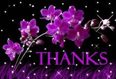 gif thank you pictures - Bing Images Thank You Gifs, Thank You Pictures, Thank You Wishes, Thank You Images, Thank You Greetings, Thank You Quotes, Gif Pictures, Thank You Cards, Sunday Greetings