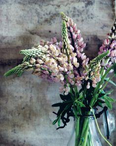 In detail_purple flowers