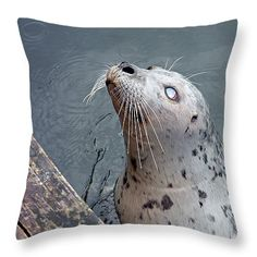 Waiting For a Snack Throw Pillow by Micki Findlay - TheSingingPhotographer.com - various sizes, home decor, cushion, seal, victoria, wharf, marine animal, ocean, beach decor