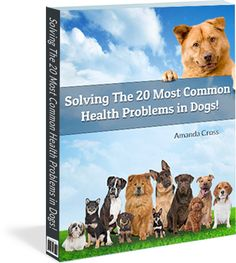 Train My Hound explains how to teach dogs of all breeds and mixes to become well-trained and social canine companions. Train My Hound offers veterinary-approved advice on house training, socialization, dog training, and canine behavior problems such as excessive barking and digging. Train My Hound offers courses in online dog training that you can easily access from anywhere.