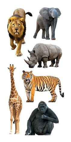 You'll be wild over the Zoo Animals Clear Stickers by Paper House Productions. Jungle Animals, Baby Animals, Funny Animals, Cute Animals, The Zoo, Tier Fotos, Animal Wallpaper, Animal Photography, Animal Pictures