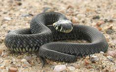 Consejos clave para cuidar a una serpiente
