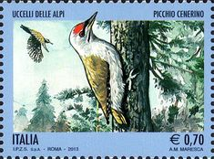 2013 - Uccelli delle Alpi - Picchio cenerino