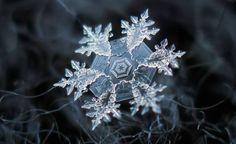Fotógrafo captura a incrível beleza de flocos de neve