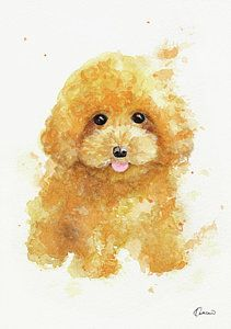 Poodle Painting Poodle Puppy By Kathleen Wong Poodle Drawing