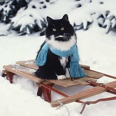 Let's go sledding...