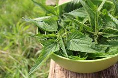 Nawóz z pokrzyw. Działanie: poprawia wzrost oraz polepsza tworzenie się chlorofilu, zwabia dżdżownice, które użyźniają glebę. Sposób użycia: młode liście i pędy pokrzywy zebrane jeszcze przed kwitnieniem zalewamy wodą (1 kg pokrzyw na 10 l wody) i odstawiamy na 2 tygodnie, by nawóz sfermentował. Preparat stosuje się przeciwko szkodnikom oraz chorobom grzybowym.