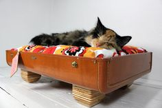 Suitcase cat bed...if my cat would use it instead of the couch, ottoman, my pillow, etc! oh, let's not forget the DVR cable box!