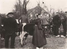 Vee op de Staphorster markt. #Overijssel #Staphorst
