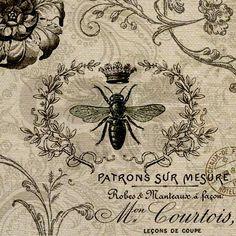 honey bee scientific illustration - Google Search