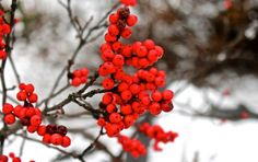 Jillian Wright won the EJC Arboretum January Photo Contest with her lovely photo of winter berry on a snowy day at the arboretum. Congratulations Jillian!