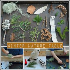 Bring the Outdoors in with a Winter Nature Table.