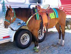 Triple Creek!! That saddle pad! I love this set !!!