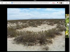 Creosote bushes are competing with the same water supply.