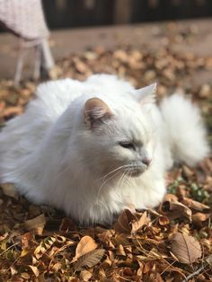 My old lady cat enjoying the fall leaves! http://ift.tt/2gKRoMz