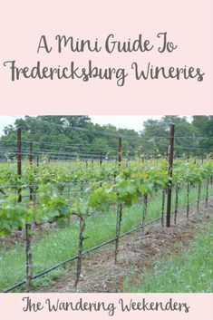 The Wandering Weekenders A Mini Guide To Fredericksburg Wineries- If you're visiting Fredericksburg, this is the perfect mini guide to the wineries in the area! Grape Creek, William Chris, Becker, and Pedernales Cellars!