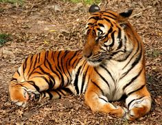 Shut Down Traveling Circus Act Accused of Abusing Tigers