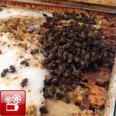 Winter Bee Inspection & Dead Bees – Beekeeping 101 Video