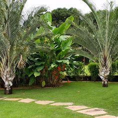 #rosalbapaisagismo #paisagismo #paisajismo #landscapedesigner #landscapearchitecture #landscaping #庭 #tuin #garten #باغ #花園 #حديقة #κήπος #сад #garden #giardino #jardim #jardin #tropical #palm #palmtree #palmeira #dypsisdecary #dypsis #heliconia #heliconiabihai