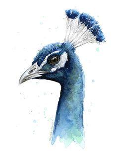 Pfau Aquarell Print, Vogel-Malerei, Tier, Aquarell, exotischen Vogel Artwork, Giclee Kunstdruck