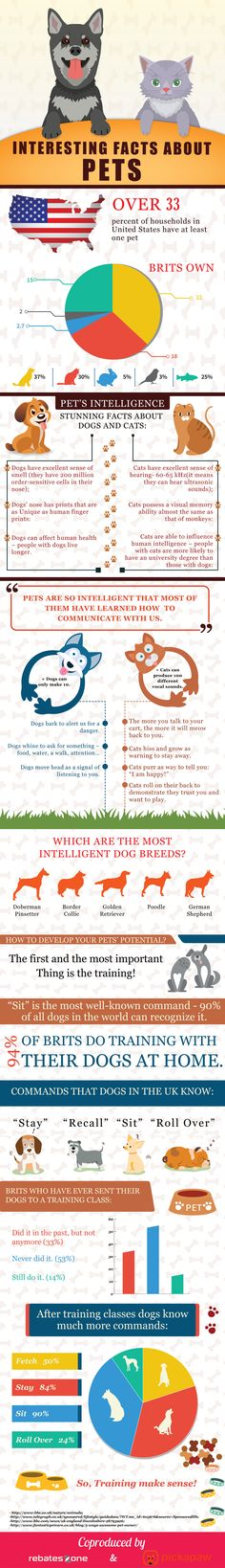 Interesting Facts About Pets