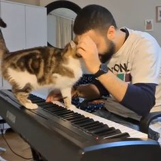 This is the best cat music ever - The cat is adorable & reminds me of our grey cat when we were little. Imágenes efectivas q - Cute Funny Animals, Cute Baby Animals, Animals And Pets, Funny Cats, Cool Cats, I Love Cats, Beautiful Cats, Animals Beautiful, Beautiful Pictures