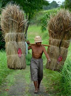 A Balinese Farmer ॐ Bali Floating Leaf Eco-Retreat ॐ http://balifloatingleaf.com ॐ