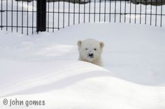 Reason 7: This photo | 21 Reasons Why Kali Is The World's Cutest Orphaned Baby Polar Bear