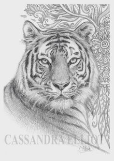 Pencil Drawing Color Tiger Pencil Drawing Print Of Original Pencil by OneSmallZen - Tiger Sketch, Tiger Drawing, Tiger Art, Pencil Drawings Of Animals, Animal Sketches, Drawing Sketches, Drawings Of Tigers, Tiger Tattoo, Tattoo Ink
