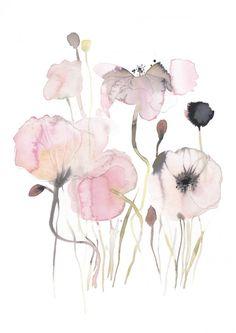 Pink Poppy - Begränsad utgåva