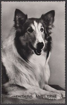 DOGS REAL PHOTO POSTCARD - Faithful and True