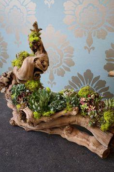 30+ Beauty Indoor Succulent Garden Ideas
