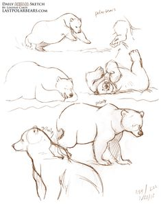 sketching bear cubs   More quick gesture sketches from the last few months. Polar bears ...