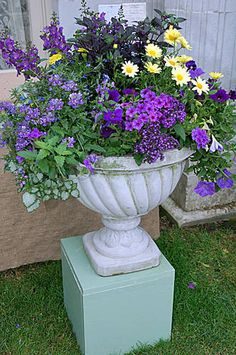 Beautiful flowers for container garden. This would be a pretty vignette with different size containers on different height bases.