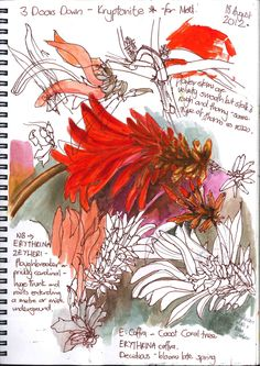 Gillian Cook - Flower a Day, day Very vibrant Sketch Painting, Drawing Sketches, Drawings, Sketching, A Level Art Sketchbook, Artist Sketchbook, Garden Journal, Nature Journal, Moleskine