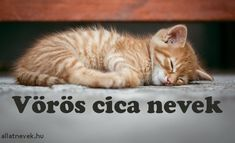 Vörös cica nevek, vörös macska nevek - Állatnevek Police, Animals, Animales, Animaux, Animal, Animais