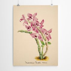 Vintage Orchid Wall Art Wall Art For Sale, Framed Artwork, Orchids, Giclee Print, Room Ideas, Fine Art, Texture, Living Room, Bedroom