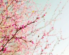Blossoming Trees, Light Blue Wall Art, Mint, Pink, Spring, Blossom Wall Art,  Purple, Pastel Photograph, Tree Decor, 8x10 Photography on Etsy, $30.00