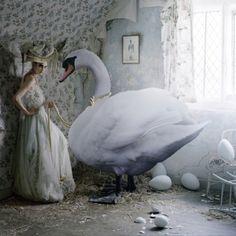 Flight of the Swan  - #Shadowflower