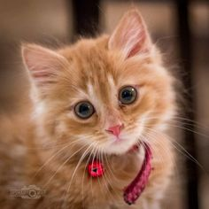 Welcome to Cute Creatures, a channel dedicated to cute, fluffy cats and curious, rambunctious dogs. Cute Kittens, Whiskers On Kittens, Baby Kittens, Cats And Kittens, I Love Cats, Crazy Cats, Cool Cats, Cute Creatures, Beautiful Creatures