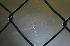 2012-10-24: mesh
