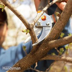 Bush Pruning Tips for Healthier Bushes