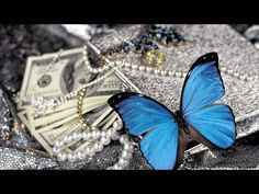 blue butterfly on pearls For Desktop Vash, Blue Butterfly, Insects, Pearls, Youtube, Animals, Desktop, Animales, Animaux