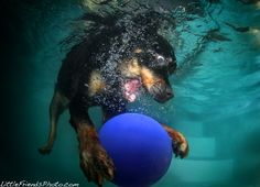 Seth Casteel   underwater dog photographer